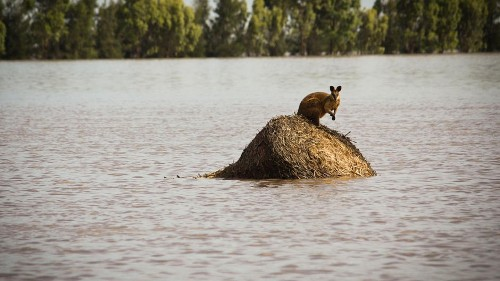 Feuer und Überschwemmungen in Australien