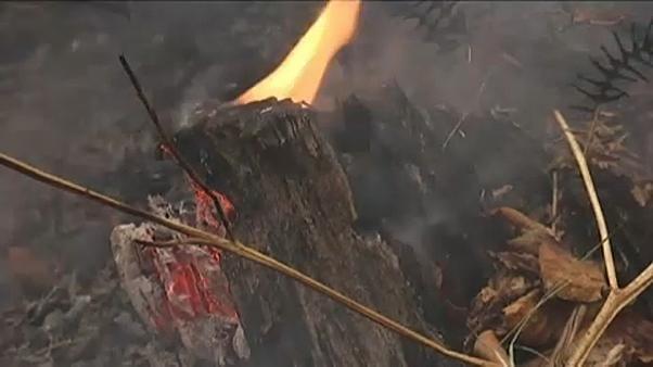 Waldbrände von Bulgarien auf Serbien übergesprungen