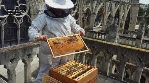 Παναγία των Παρισίων: Γλίτωσαν από τη φωτιά οι μέλισσες!