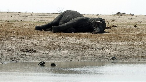 Zimbabwe puts its wild animals up for sale