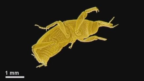 Bilim insanları böceklerden teknoloji öğrenecek