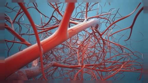 3 boyutlu yazıcılarla üretilen organlar ölümsüzlük mü vaat ediyor?