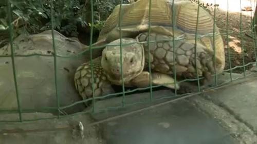 Kockakővel verték agyon az állatkerti teknőst