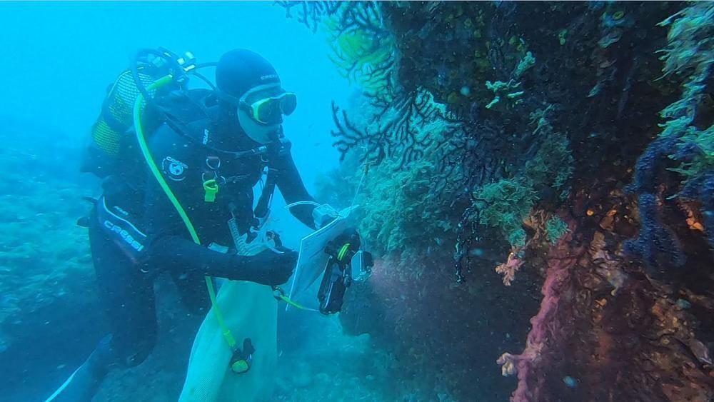 Marine Hitzewellen: Auswirkungen des Klimawandels auf Ozeane