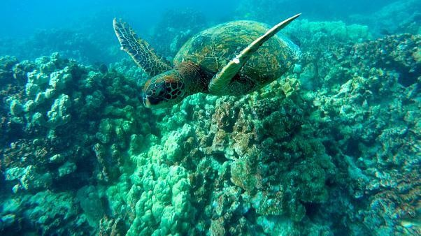 Marine life threatened as oceans lose oxygen due to climate change - report