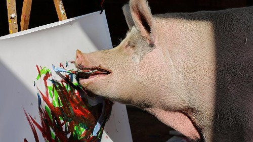 Painting sow 'Pigcasso' hogs the limelight at South Africa farm