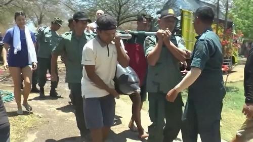 Bali: 4 Delfine aus Hotelpool gerettet, 1 Delfin tot