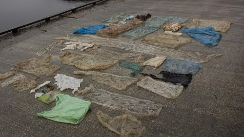 Beached whale had 30 plastic bags in its stomach