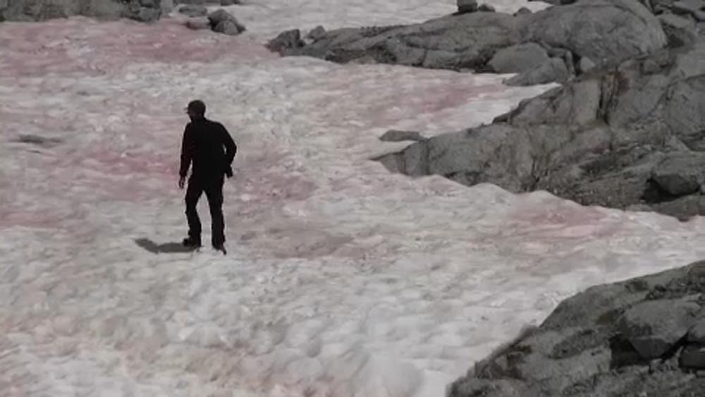 Climat : mais pourquoi la neige devient-elle rose dans les Alpes en Italie ?