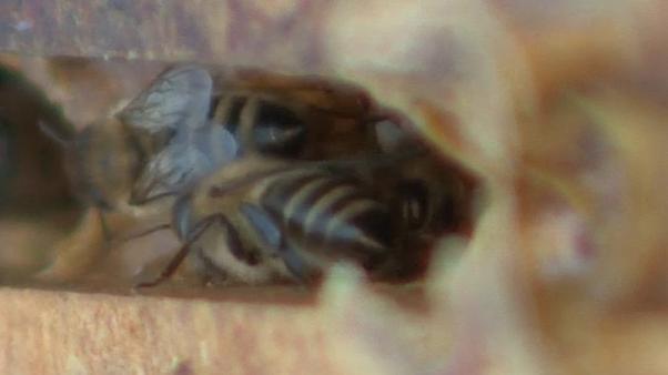 Bienen - ein bestechender Wirtschaftsfaktor