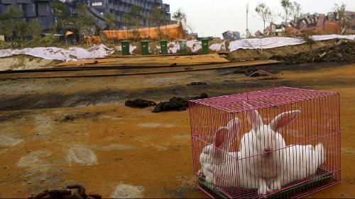 الصين في مواجهة حالات تلوث بيئي خطير في محيط منطقة تيانجين