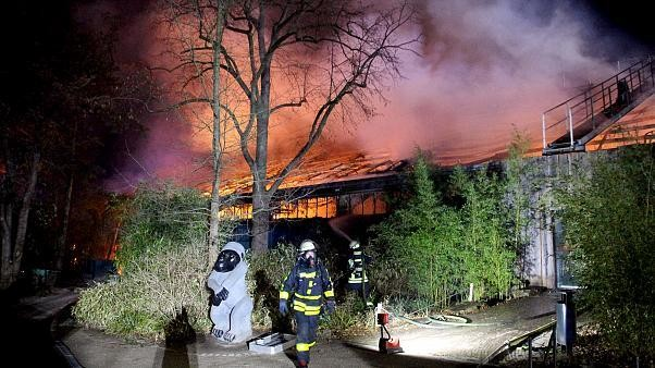 German zoo fire kills over 30 animals including apes, monkeys and bats