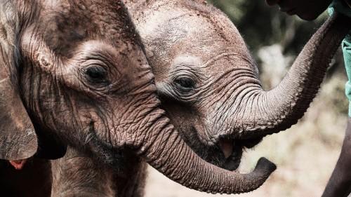 """This Website Translates English Into """"Elephant"""""""