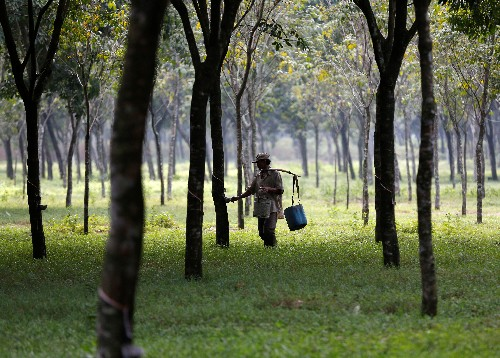 Top natural rubber producers ending export curbs: sources