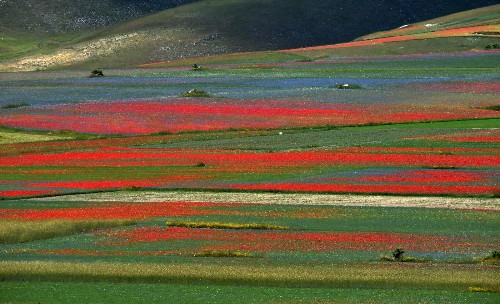 The Annual Flowering in Castelluccio, Italy: Pictures