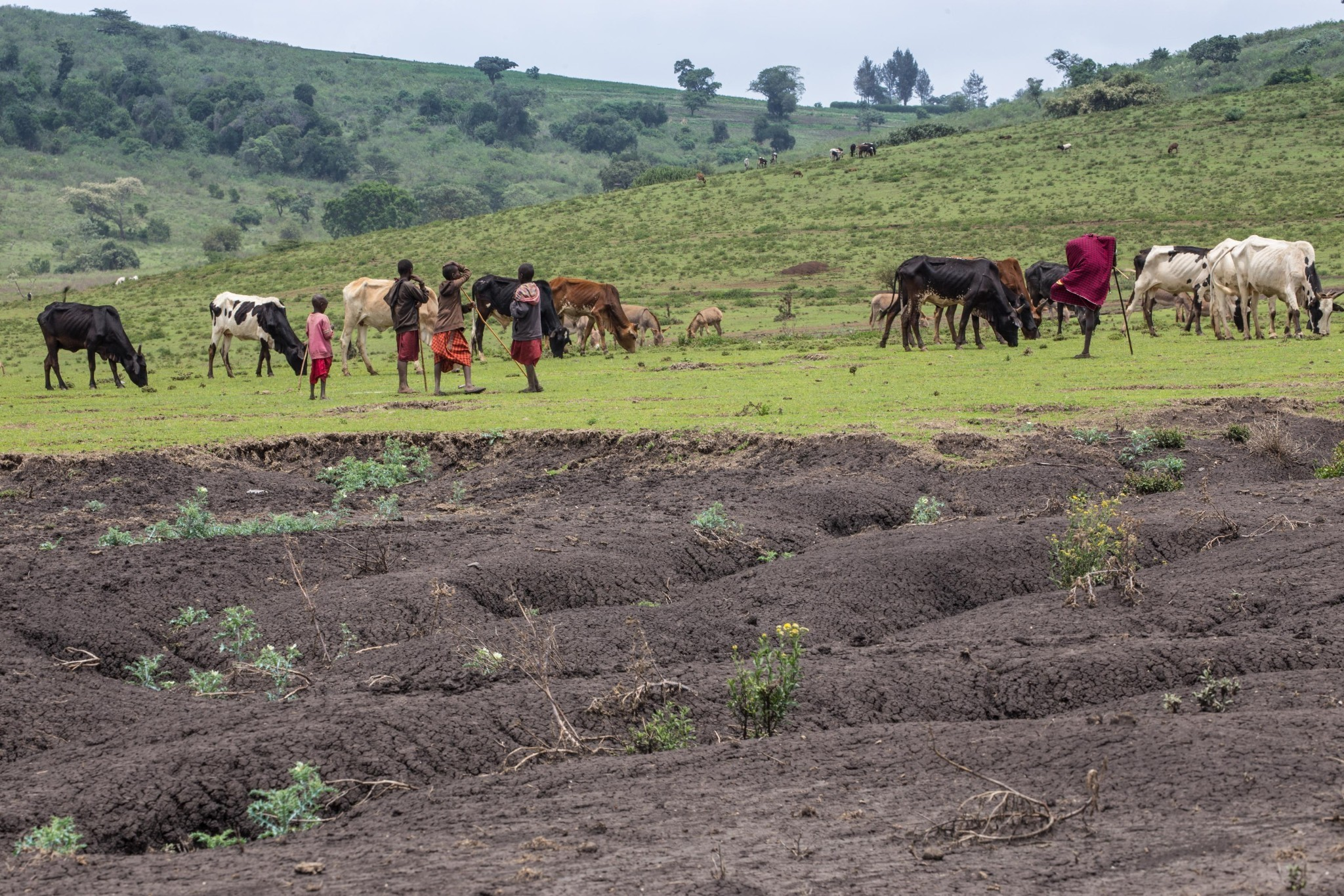 Third of Earth's soil is acutely degraded due to agriculture