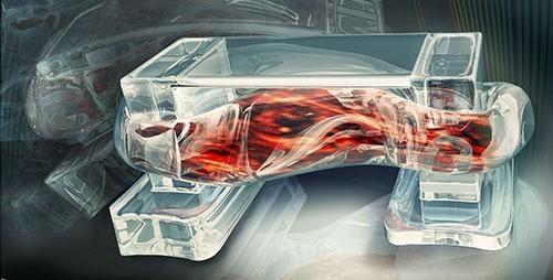 Researchers Create Walking, Muscle-Powered Biobots
