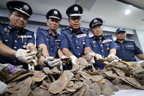 Wildlife group: Malaysia seizes record 30-ton pangolin haul