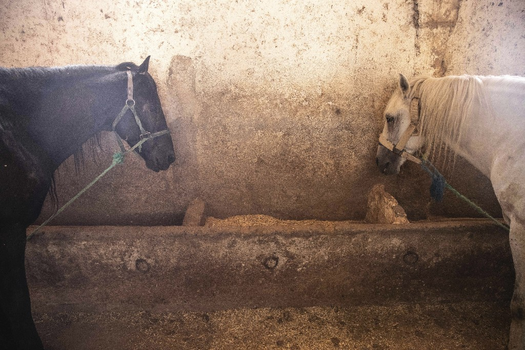 Starvation looms for Morocco's horses as tourism collapses