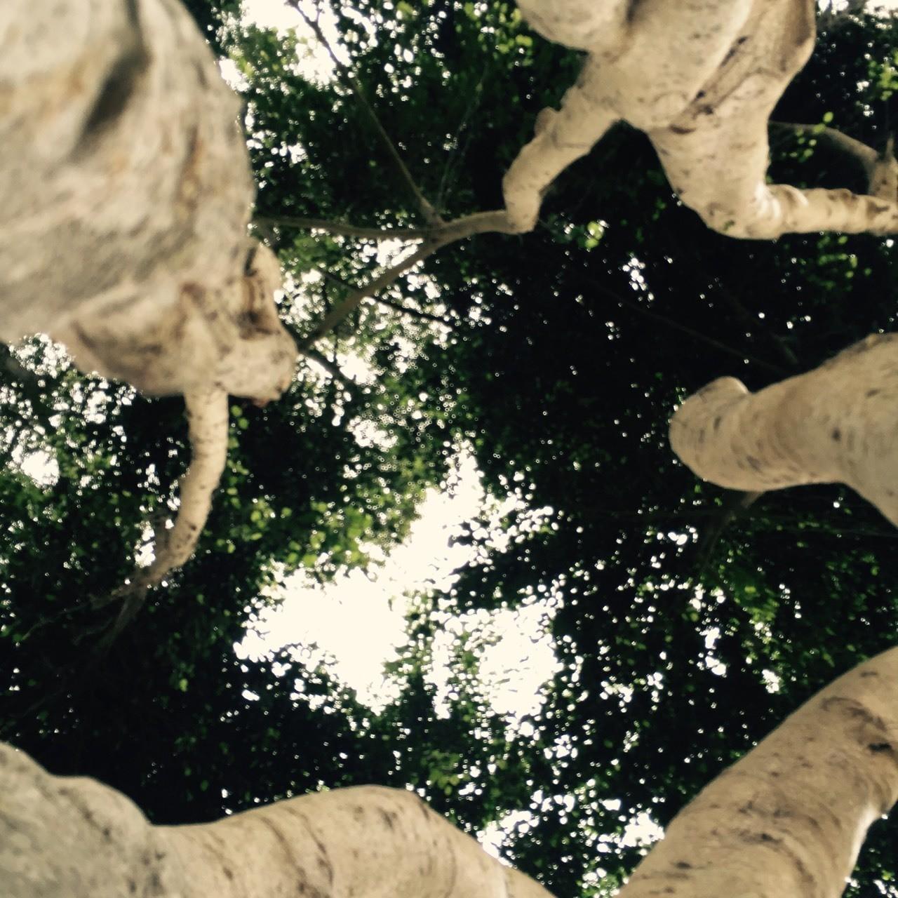 Desde el centro del árbol