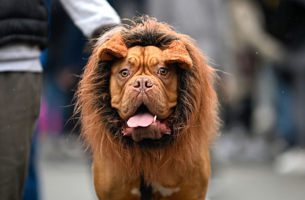 Halloween Goes To The Dogs: Pictures