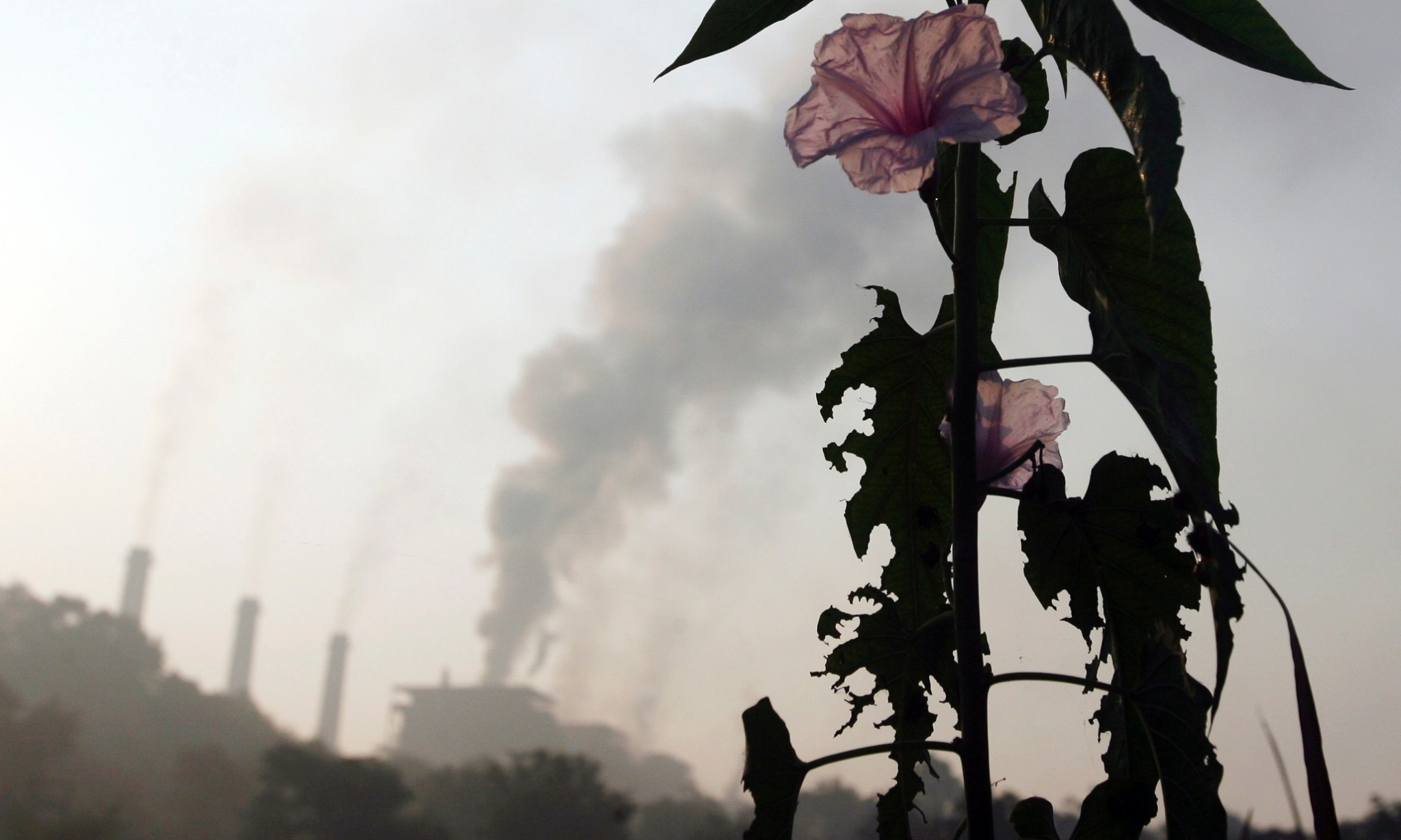 The UN climate summit reveals India's hypocrisy on saving forests