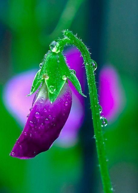 garden cover image