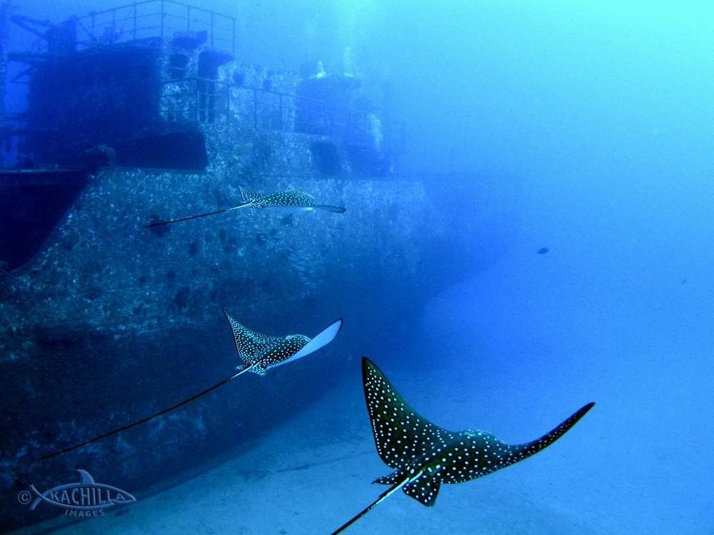 Scuba Diving Adventures - Magazine cover