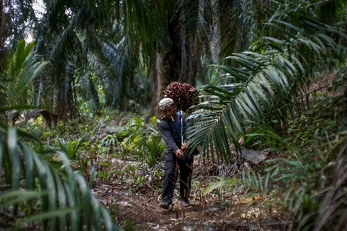 Analysis: Buy green palm oil or forests will suffer, industry warns