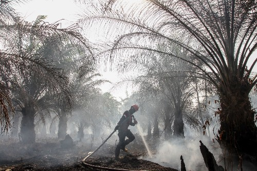 Forest Fires Rage in Indonesia: Pictures