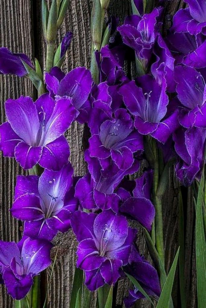 اجمل الزهور - Magazine cover