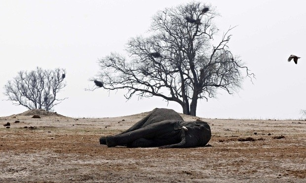 Elephants are being wiped out, but not enough people seem to care