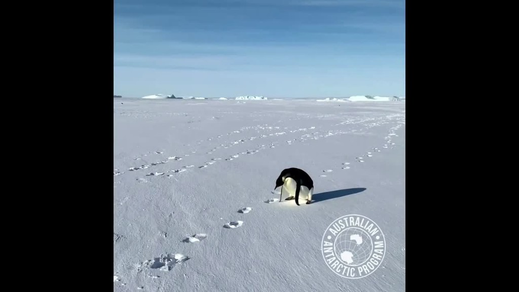 Penguin 'chats' with expeditioner in Antarctica