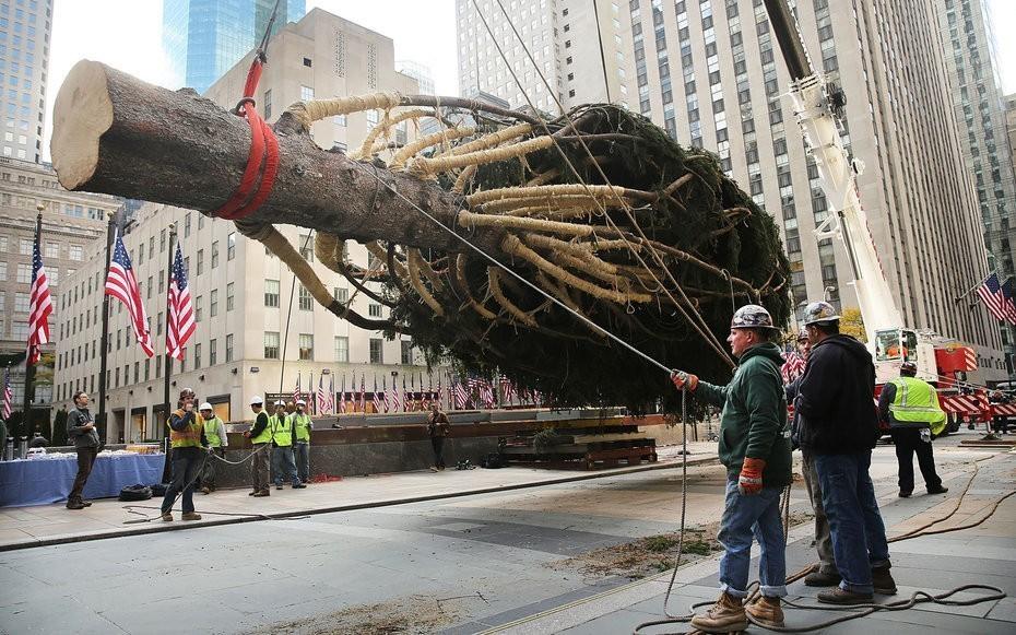 How Rockefeller Center Chooses a Christmas Tree Each Year