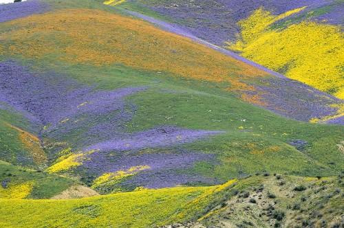 California Super Bloom in Pictures