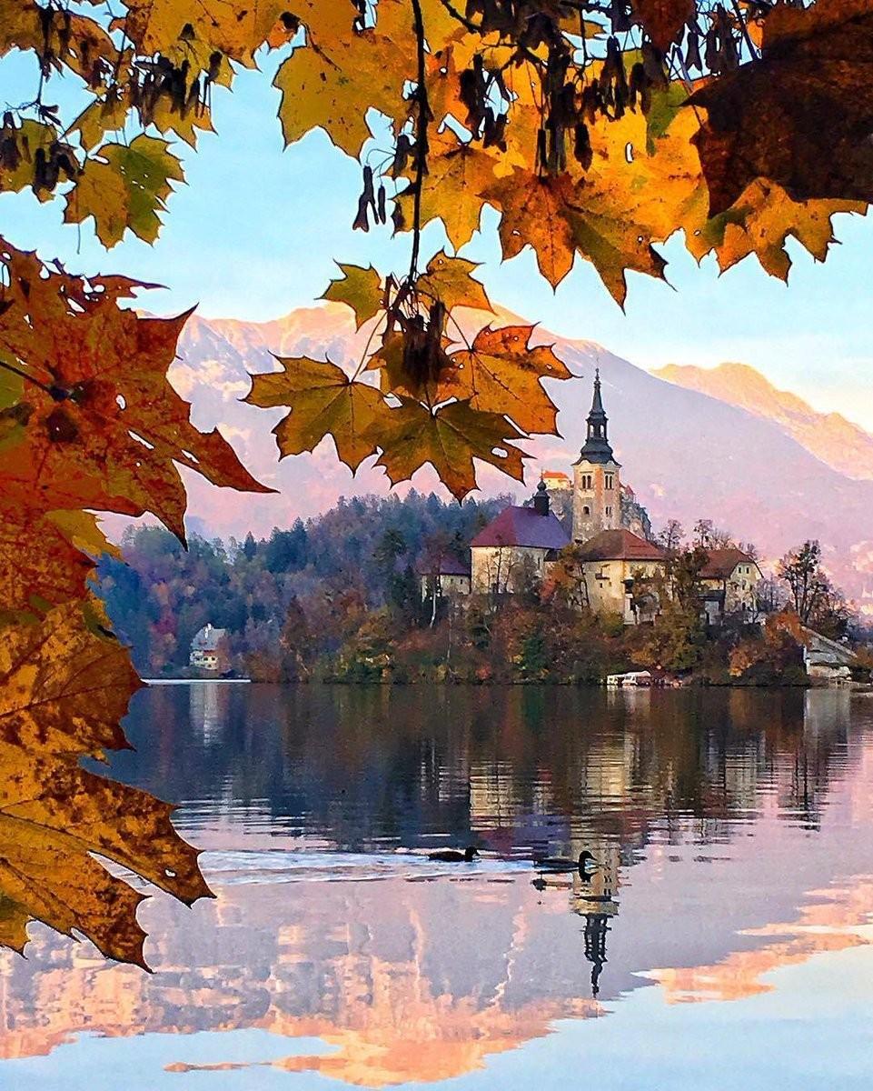 viola 🌏 Lake Bled 🌏 Slovenia