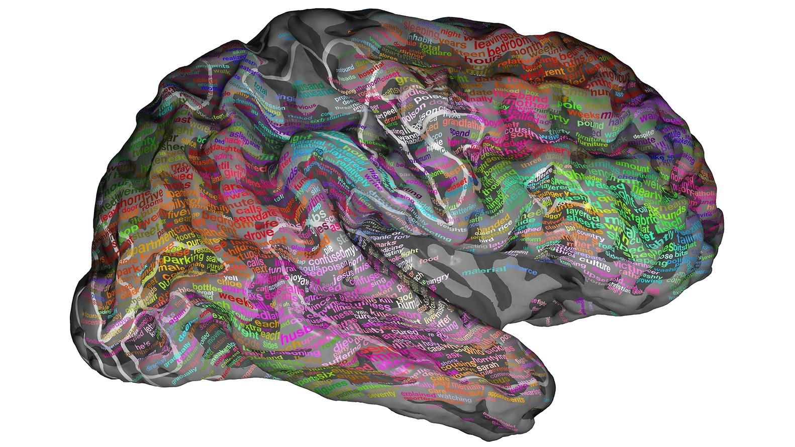 Scans Show The Brain Groups Words By Meaning