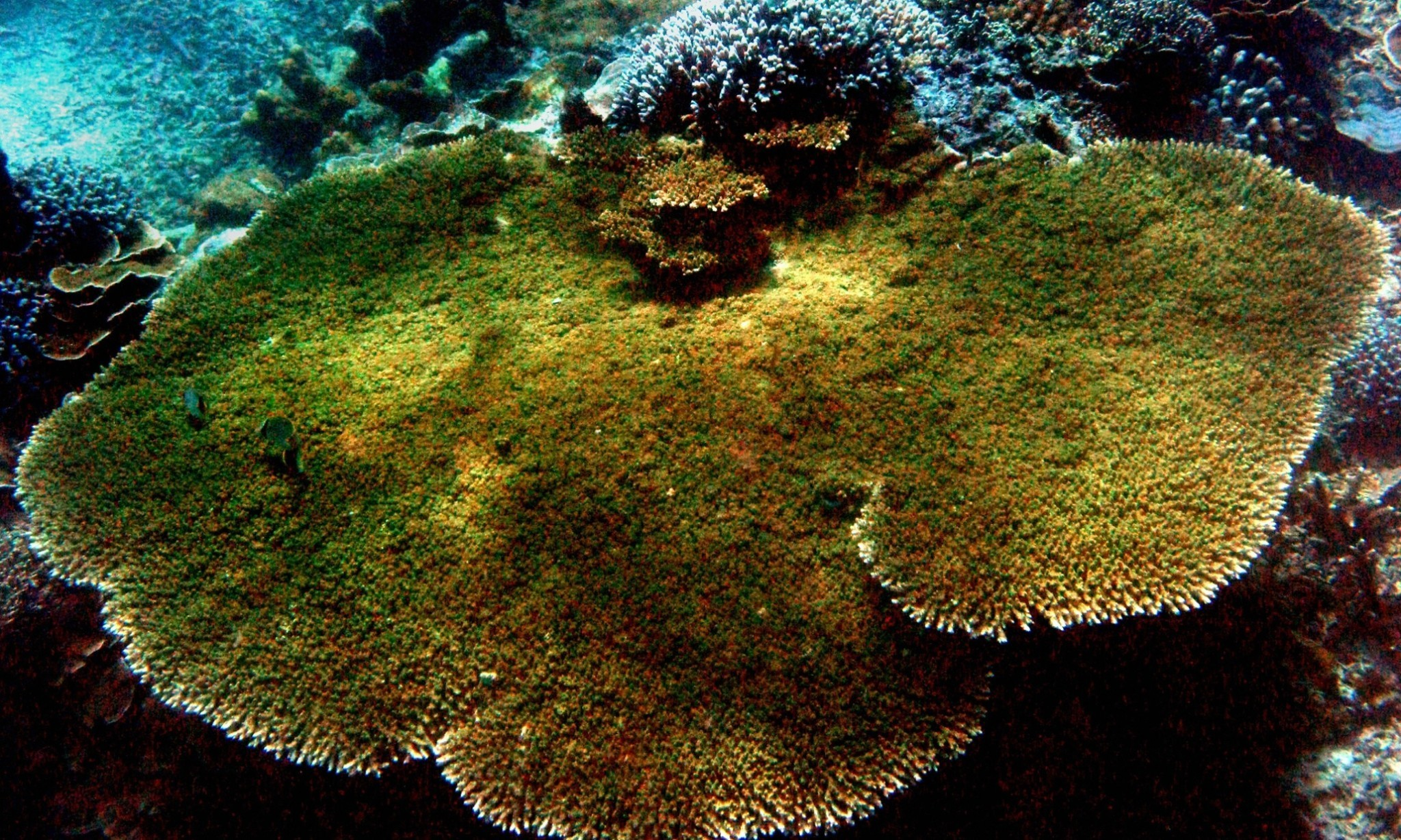 El Niño would be a disaster for the world's coral reefs