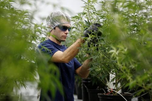 Pot Pharm: Booming Canada weed sector plots next-wave medicines
