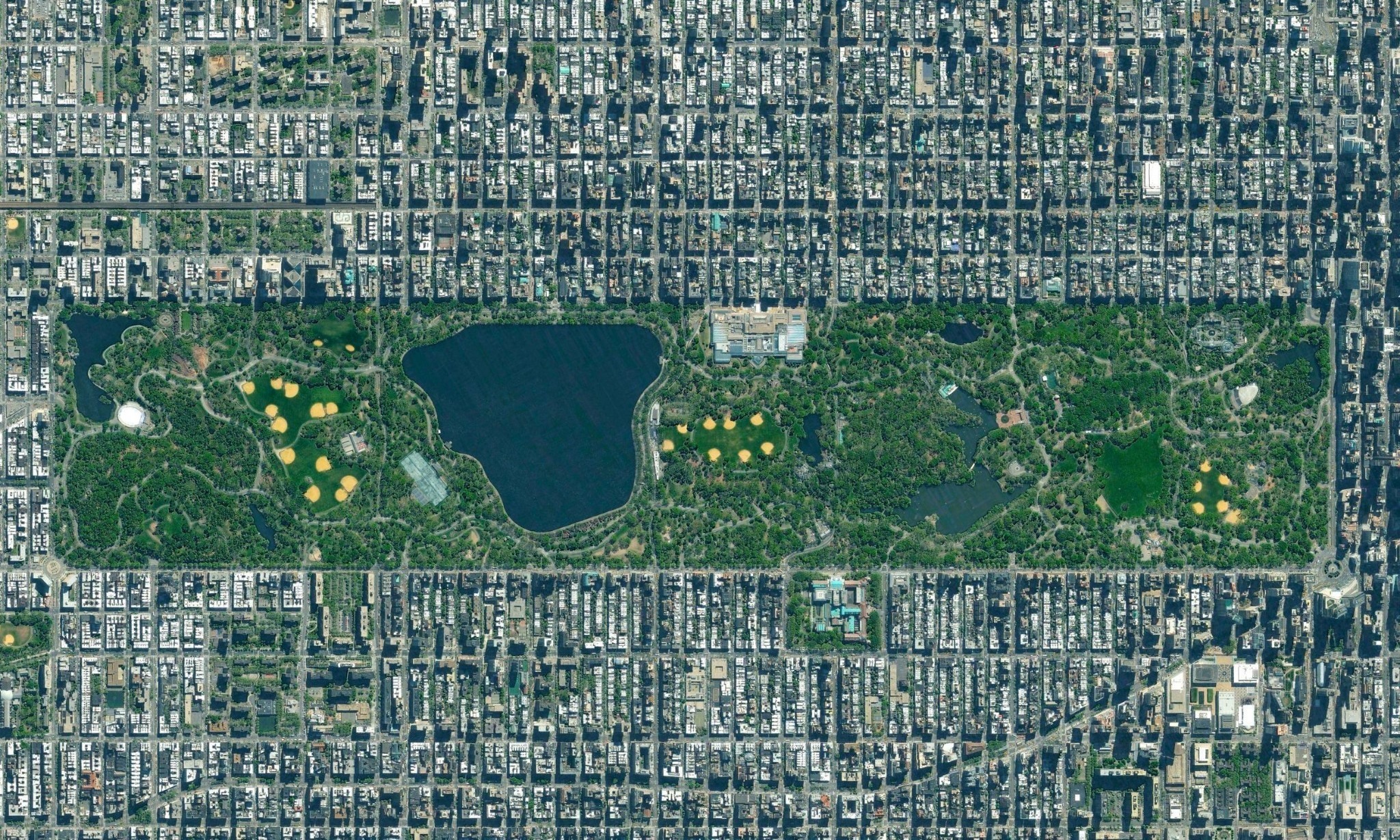 Interactive project maps all 600,000 trees in New York City's urban forest
