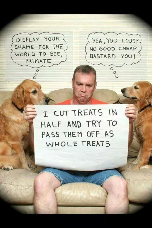 Dogs shaming their hoomans!