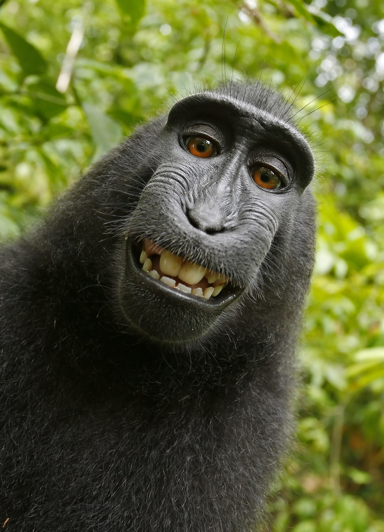 The 'Monkey Selfie' Monkey Just Filed an Appeal