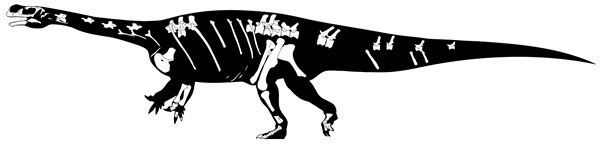 Skeletal structure of Aardonyx.