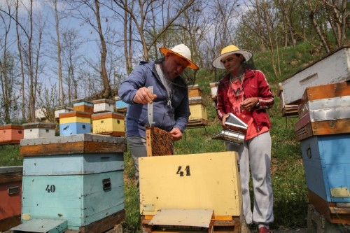 Serbia's beekeepers struggle as insecticide poisoning hits honey bees
