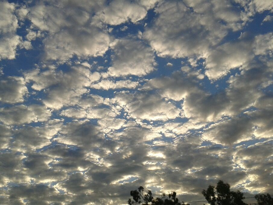 Cirrus cumulus