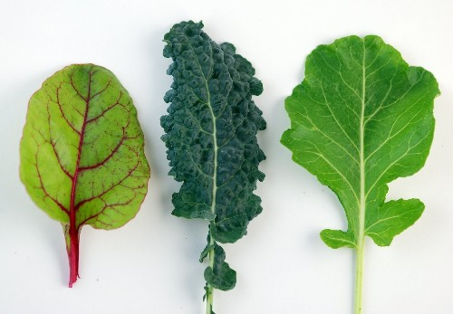 10 Superfoods Healthier Than Kale | HuffPost Life