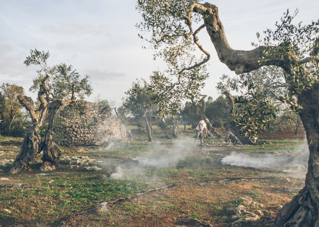 The race to save Italy's olive trees—and four more captivating stories