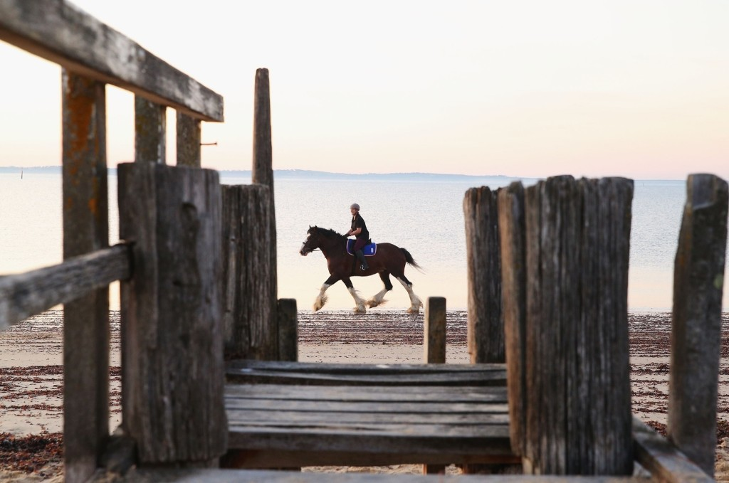 Training Horses on the Beach in Australia: Pictures