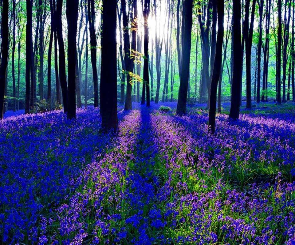 Quien no daria algo a cambio de estar ahi, en un lugar tranquilo, lleno de hermosas flores, donde el amor y los sueños se puedan hacer realidad