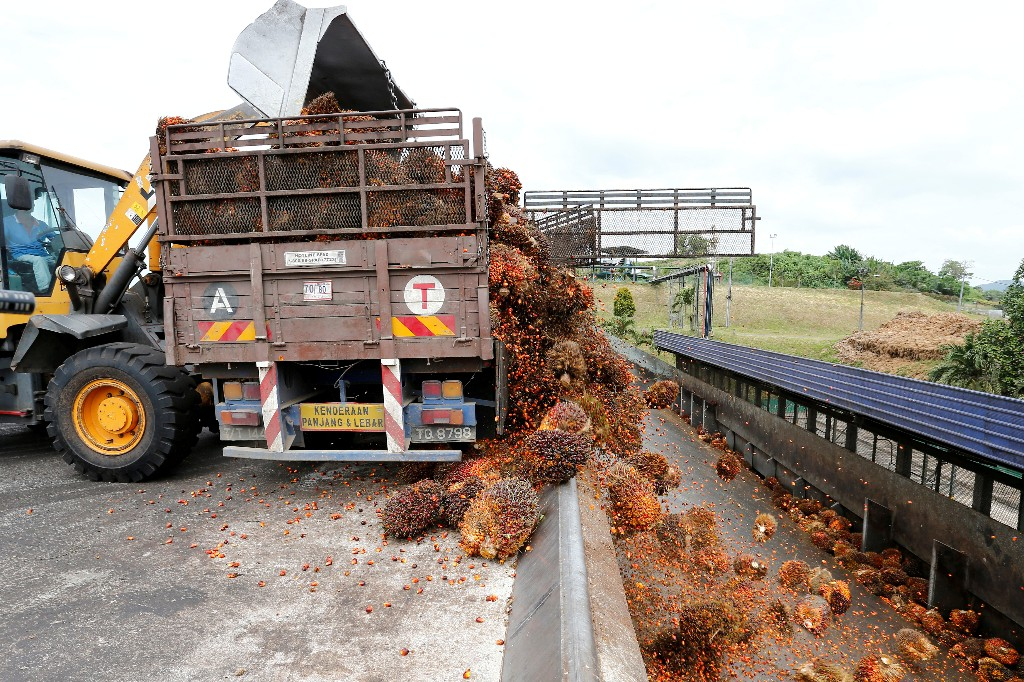 Malaysia palm growers warn of bigger labour shortage due to virus curbs
